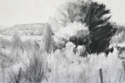 Lane-Hall-August-Light-24x36-graphite-and-gesso-on-board-3300-Contact-for-Purchase