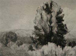 Lane-Hall-High-Country-18x24-graphite-and-gesso-on-board-Contact-for-Purchase