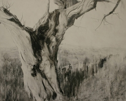 Lane-Hall-The-Story-Teller-II-24x30-graphite-and-gesso-on-board-2800-Contact-for-Purchase