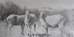 Lane Hall, Dusty Sheep, Graphite and gesso (Sold)