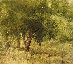 Lane Hall, Hillcrest Oak, Water Media (Sold)