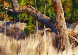 Lane Hall, Light and Shadow With Trees, Watercolor (Contact for Purchase)